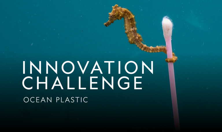 Image of a sea horse using a used ear cotton swab, with the text 'Innovation Challenge: Plastic Ocean' written on the side