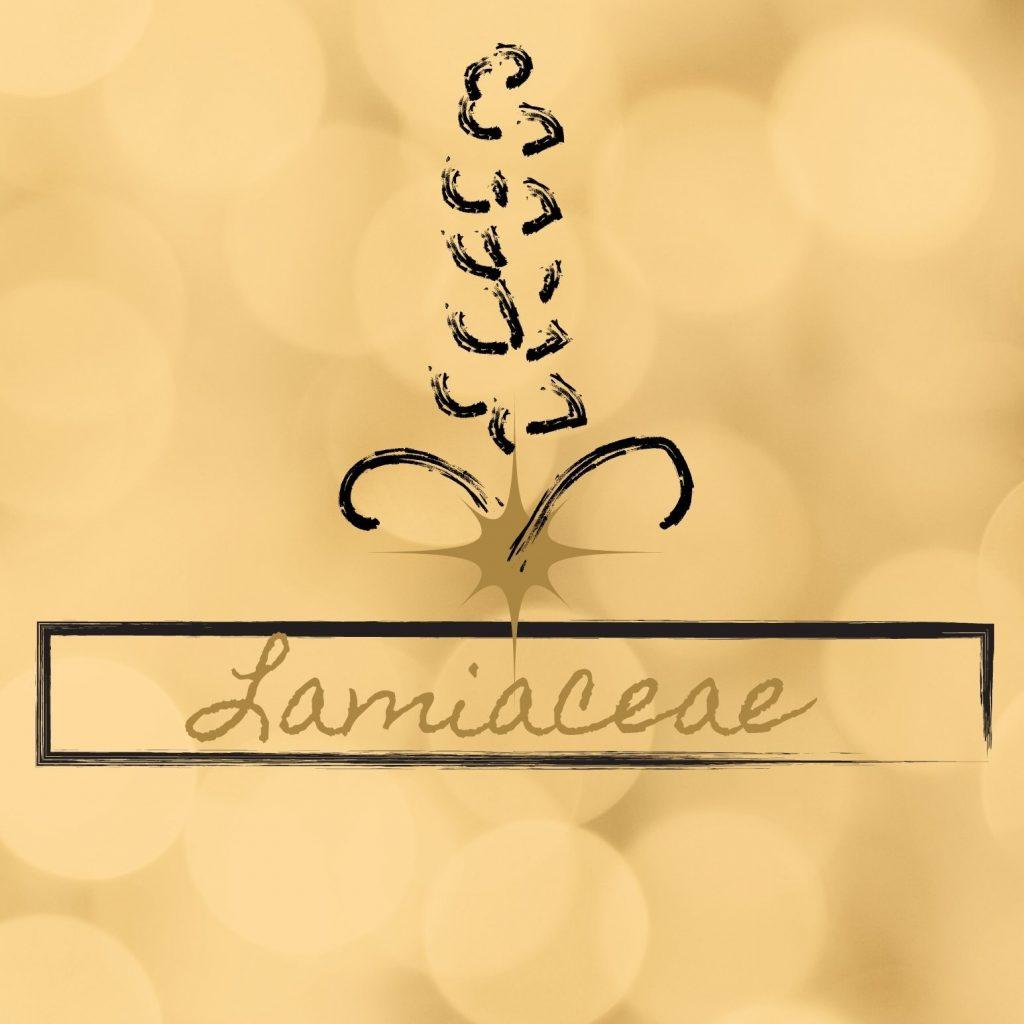 Lamiaceae_Logo